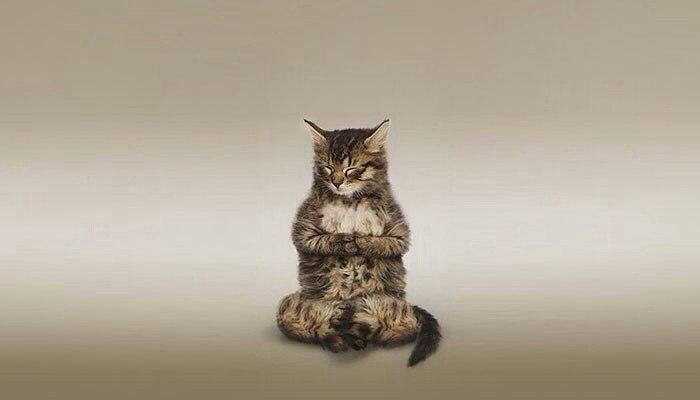 9 причин, почему стоит завести кота