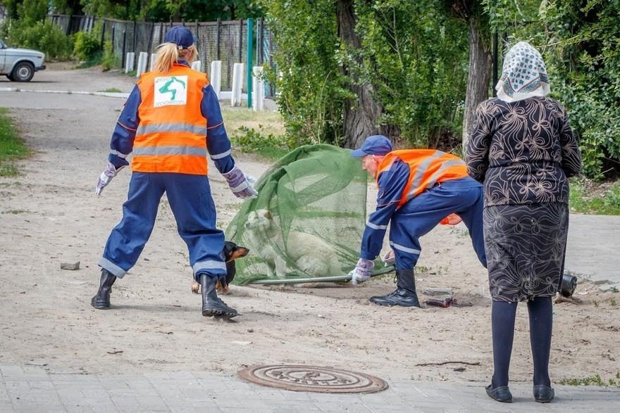 С начала года в Днепре отловили и стерилизовали тысячу бездомных собак
