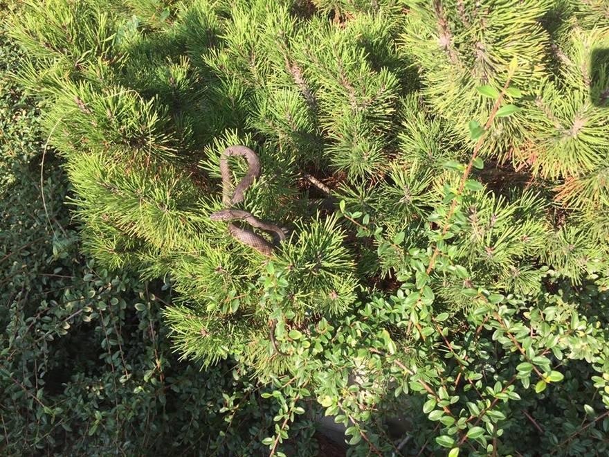 В Днепре в кустах нашли змею (фото)