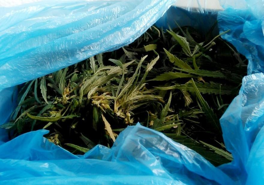В Днепре задержали наркоторговца с большой партией марихуаны